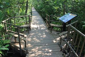 Nature Trails/Walkways/Boardwalks